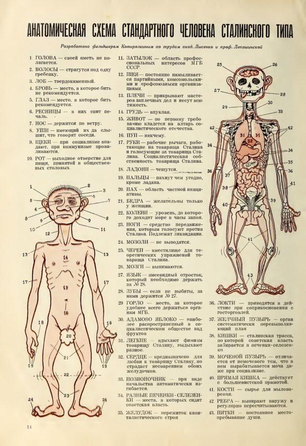 «Анатомическая схема человека сталинского типа», журнал «Сатирикон», 1951 год
