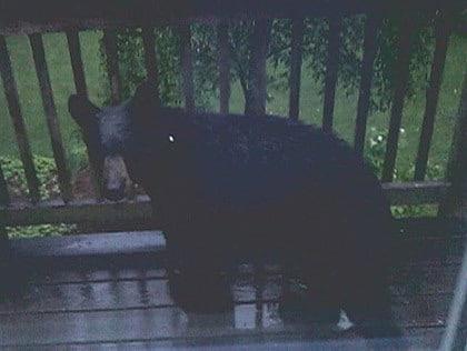 Black Bear Spotted In North Grafton, Westboro – CBS Boston